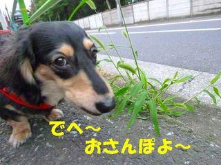 まりんお散歩20100626.jpg